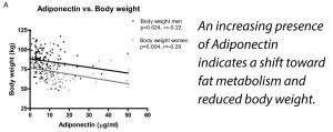 Adiponectin Indicates A Shift Toward Lower Body Weight