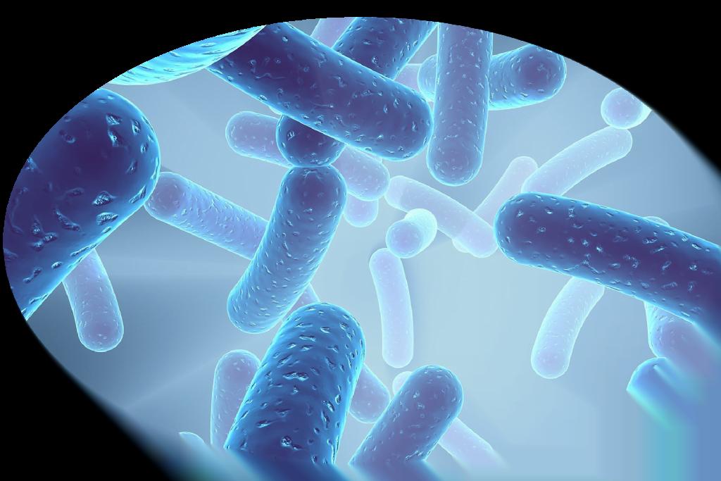 lactospore probiotic